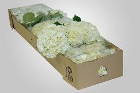 bulk flowers collection yola guz wedding flowers