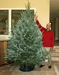Krinner Christmas Tree Genie Xxl by Amazon Com Heavy Duty Christmas Tree Stand 3 Brace Standtastic