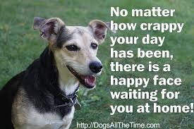 Happy Dog Meme - memes dogs all the time