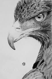art by dorian nacu drawing pinterest drawings bird and sketches