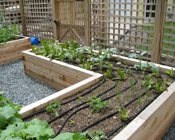 Raised Planter Beds by Best Timber For Raised Vegetable Beds Design Decorating Timber For