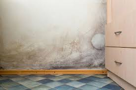 How To Get Rid Of Black Mold In Bathroom How Can I Find Mold In My Home And What Do I Do About It Mnn