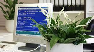 plantes bureau plante bureau d 233 coration bureau plantes