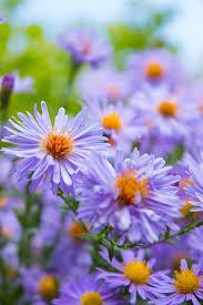free photo nature flowers bush bright colors garden flowers max
