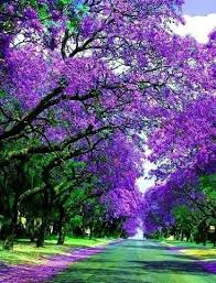 the of the purple tree christinernlmt