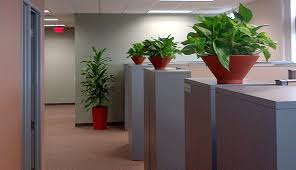 plants for office office plants indoor plants for office