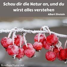 natur sprüche 15 best zitate und sprüche images on health poems and