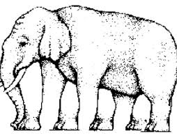 The Blind Men And The Elephant Analysis Elephant Optical Illusion Baffles The Internet Daily Mail Online