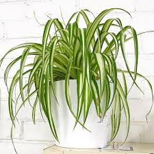 plants that don t need sunlight to grow easy care plants that stay alive with little love