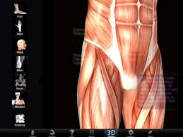 Google Body Anatomy Muscle And Bone Anatomy 3d Android Apps On Google Play
