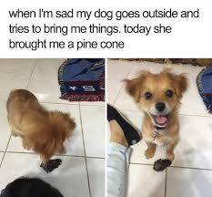 Cute Dog Memes - 40 cute wholesome dog memes that will make you smile from ear to ear