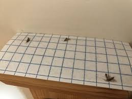 Tiny Moths In My Bathroom I Seem To Have Lots Of Small Moths In My House Anyone Else