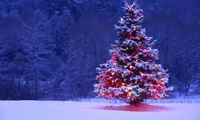 who brought the first christmas tree to america historybuff