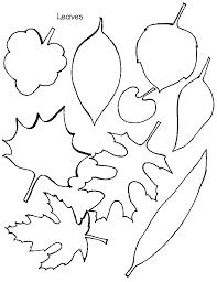 oak leaf coloring page 100 images stag beetle on a oak leaf