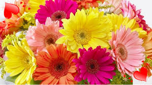 s day flowers s day flowers for the bright post health