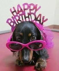 Birthday Meme Dog - dachshund happy birthday meme memeshappy com