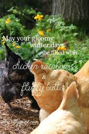 tilly u0027s nest gloomy winter days and backyard chickens into the