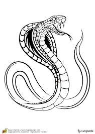 coloriage d u0027un serpent cobra