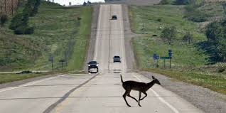 study iowa ranks 4th in nation for deer collision claims