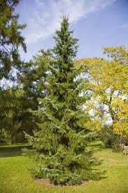 37 best trees images on pinterest garden ideas landscaping