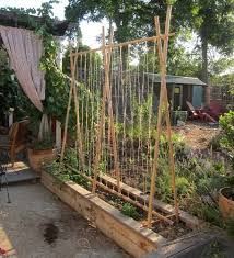 Wood Trellis Plans by 128 Best Bamboo Ideas Images On Pinterest Bamboo Ideas Ideas