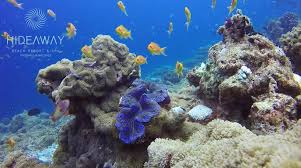maldives coral reef hideaway beach maldives house reef august 2015 maldives coral reef hideaway beach maldives house reef august 2015