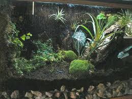 amphibian care u003e u003e tropical terrarium design