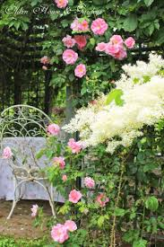 546 best a rose is a rose images on pinterest flowers beautiful