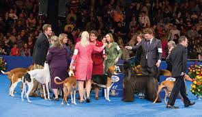 your 2013 national show winners purina