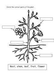 english teaching worksheets parts of a plant
