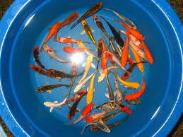 aquarium fish exporter from asia