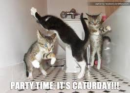 Caturday Meme - party time it s caturday meow aum