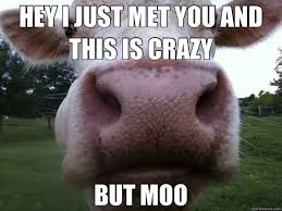 Moo Meme - 20 fantastically funny cow memes to put you in a happy moo d i can