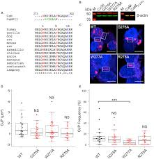 frontiers structural and functional consequences of connexin 36