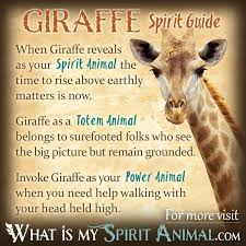 best 25 animal spirit guides ideas on animal totems