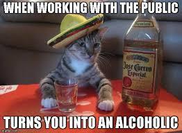 Working Cat Meme - alcohol cat imgflip