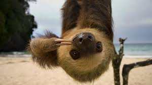 sloth beach upside down ngsversion 1396530757113 adapt 1900 1 jpg