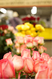 Wholesale Roses Susie U0027s Wholesale Flowers U2014 Southern California Flower Market