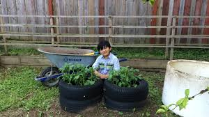 planting potatoes in tires backyard organic gardening ideas with