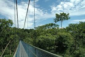treetop walk central catchment nature reserve parks nature