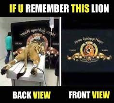 Do Memes - do you remember this lion memes fun things to do when bored