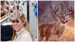 Princess Beatrice Hat Meme - princess beatrice s royal wedding hat birth of a meme