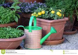 pictures terrace garden pots free home designs photos