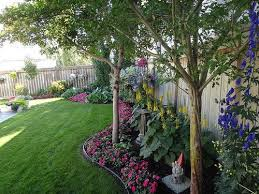 Good Backyard Trees by Best 25 Living Fence Ideas On Pinterest Hedge Fence Ideas