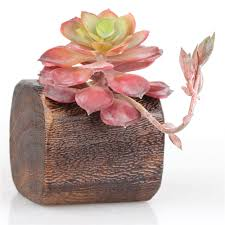 compare prices on wooden containers for flowers online shopping