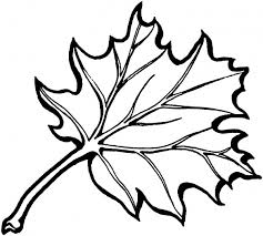 free eastern black oak leaf coloring page super coloring