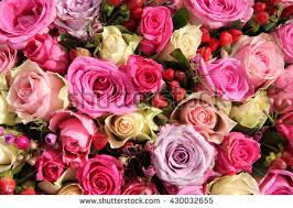 bridal decorations bridal decorations roses berries different shades stock photo