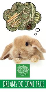 rabbit bunny house rabbits pet rabbit care bunny pictures