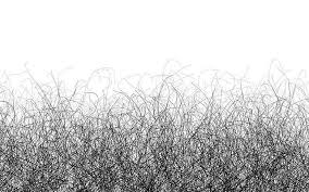 gray pubic hairs why you may need to stop shaving your pubic hair the news chronicle