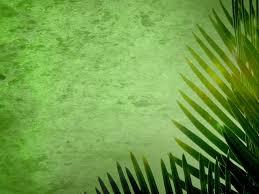 palms for palm sunday purchase palm sunday backgrounds palm sunday loop 01 inspiring